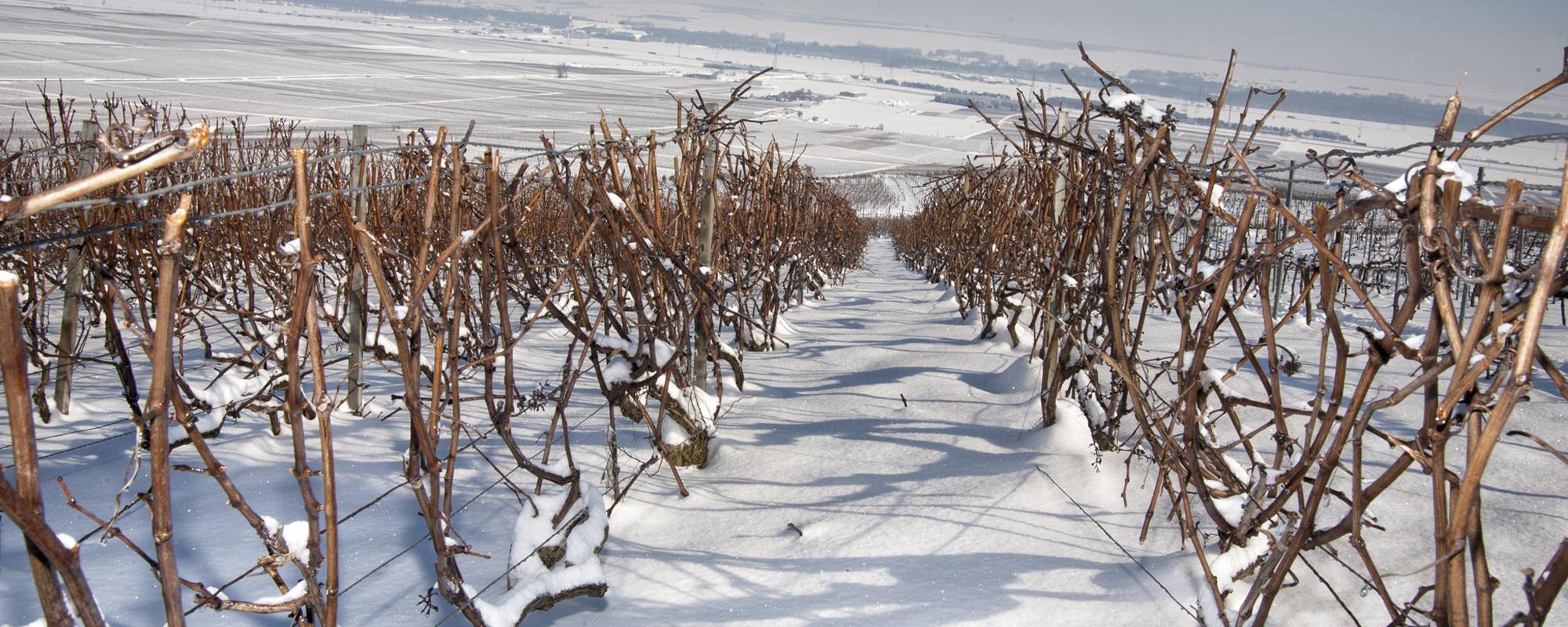 prestation_viticole_hiver